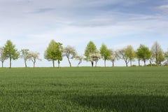 Baumreihe auf Ackerland im Frühjahr Stockbild