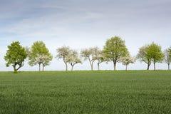 Baumreihe auf Ackerland im Frühjahr Lizenzfreie Stockbilder