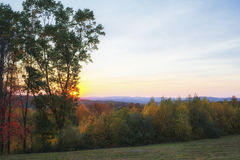 Baumreihe auf einem Hügel Stockbilder