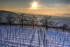 Baumreihe bei Sonnenuntergang Stockbilder