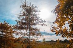 Baumreihe, das Farbe im Fall in Akron Ohio geändert haben Stockfotos