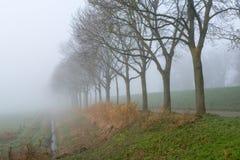 Baumreihe in einem dichten Nebel Lizenzfreies Stockfoto