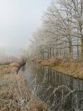 Baumreihe entlang dem Wasser an einem Wintertag Stockfotos