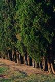 Baumreihe gerade am Abend Stockfotos