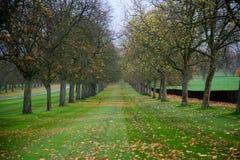 Baumreihe im Fall mit Blättern und Gras Lizenzfreie Stockfotos