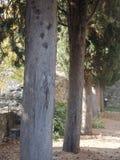 Baumreihe im Schlossboden lizenzfreie stockbilder