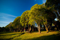 Baumreihe mit dem Sonnenlicht Stockfotografie