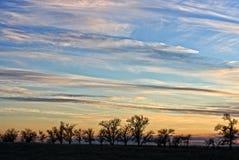 Baumreihe und ein dunstiger Sonnenuntergang Lizenzfreies Stockfoto
