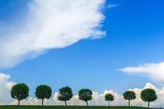 Baumreihe unter dem düsteren Himmel Baum sieben in einer Linie Stockfotografie