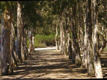 Baumreihe während der Tageszeit stockfotografie
