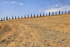 Baumreihen der italienischen Zypresse und ländliche Landschaft des gelben Feldes, Tus stockbilder