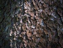 Baumrinde, Baumrindefoto, Barkenfoto, Waldbaumrinde, Baum t Stockfotos