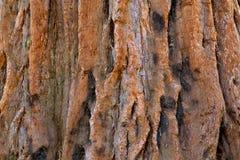 Baumrinde-Beschaffenheit Stockfoto
