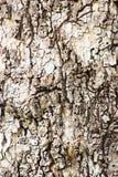 Baumrinde-Beschaffenheits-Hintergrund-Muster Lizenzfreies Stockbild