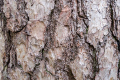 Baumrinde-Beschaffenheits-Hintergrund-Muster Stockbild