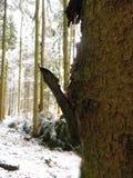 Baumrinde, die heraus im Winter haftet stockbilder