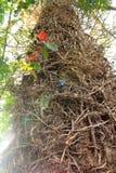 Baumrinde, die interessantes Klettern ist, verzweigt sich stockbild
