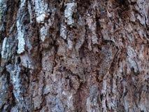 Baumrinde in Form von Zusammenfassung stockfotografie