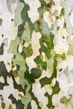 Baumrinde-Hintergrund Lizenzfreies Stockbild