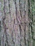 Baumrinde-Hintergrund stockfoto