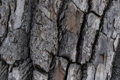Baumrinde-Hintergrund-Beschaffenheit lizenzfreies stockbild
