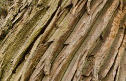 Baumrinde mit Linien in den einheitlichen Linien stockfotografie