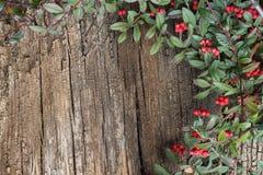 Baumrinde und grüne Blätter stockfotos