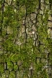 Baumrinde und Moos Lizenzfreies Stockfoto