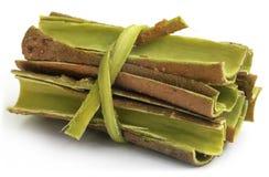 Baumrinde von Moringa.oleifera stockfotografie