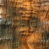 Baumrindebeschaffenheit Lizenzfreies Stockbild