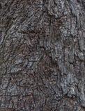 Baumrindebeschaffenheit und -hintergrund Lizenzfreie Stockbilder
