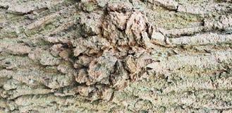 Baumrindebeschaffenheitshintergrund lizenzfreies stockfoto