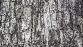 Baumrindebeschaffenheitstapete Lizenzfreies Stockbild