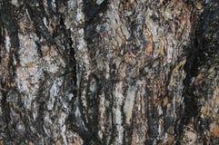 Baumrindehintergrund stockbild