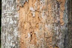 Baumrindeholzbeschaffenheit lizenzfreie stockfotografie