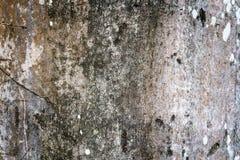 Baumrindeholzbeschaffenheit lizenzfreies stockfoto