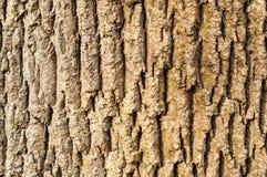 Baumrindenahaufnahme Lizenzfreies Stockfoto