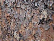 Baumrindenahaufnahme im Braun und in den Graun lizenzfreie stockfotos
