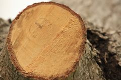 Baumringe, Holz stockbilder