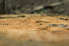Baumringnahaufnahme Stockbild