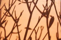 Baumschatten Stockfoto