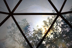 Baumschatten auf Dach der botanischen Haube Lizenzfreies Stockbild