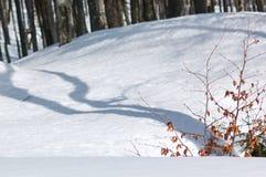 Baumschatten auf dem Schnee Stockbild
