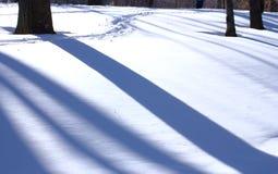 Baumschatten auf Schnee Stockfotos