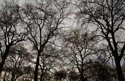 Baumschattenbild Stockfotos