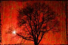 Baumschattenbild Stockbild