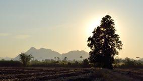 Baumschattenbild auf Feld und Berg Lizenzfreies Stockbild