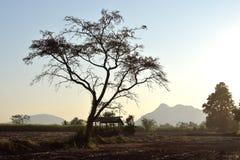 Baumschattenbild auf Feld und Berg Stockbild