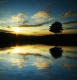 Baumschattenbild auf Sonnenuntergang Stockbild