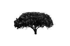 Baumschattenbild auf weißem Hintergrund stock abbildung